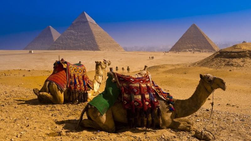 24-cammelli-con-piramidi-in-sfondo-1462777997