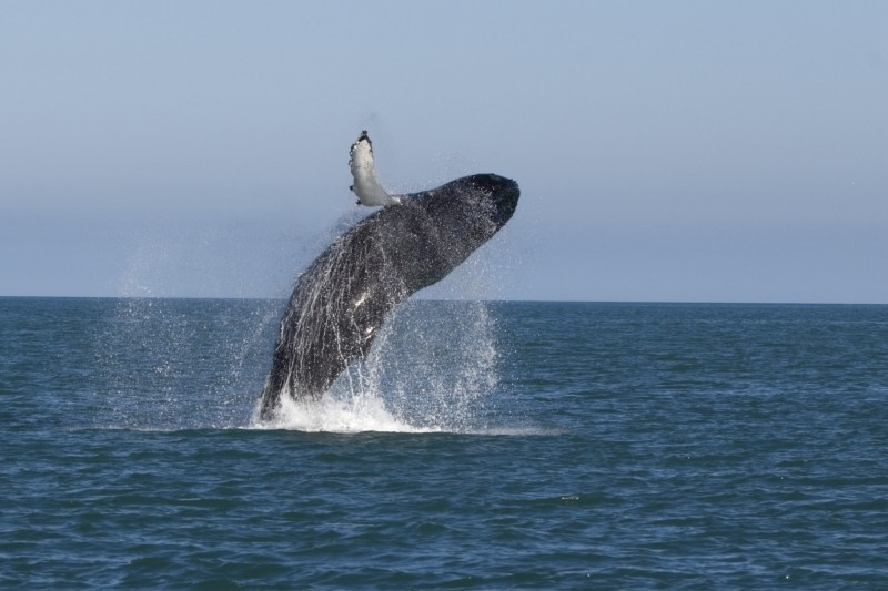 125-balene-islanda