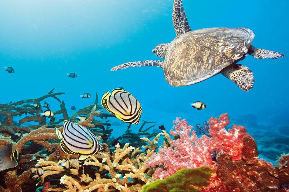 maldive-gallery01
