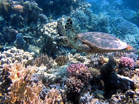 turtle-185484-340