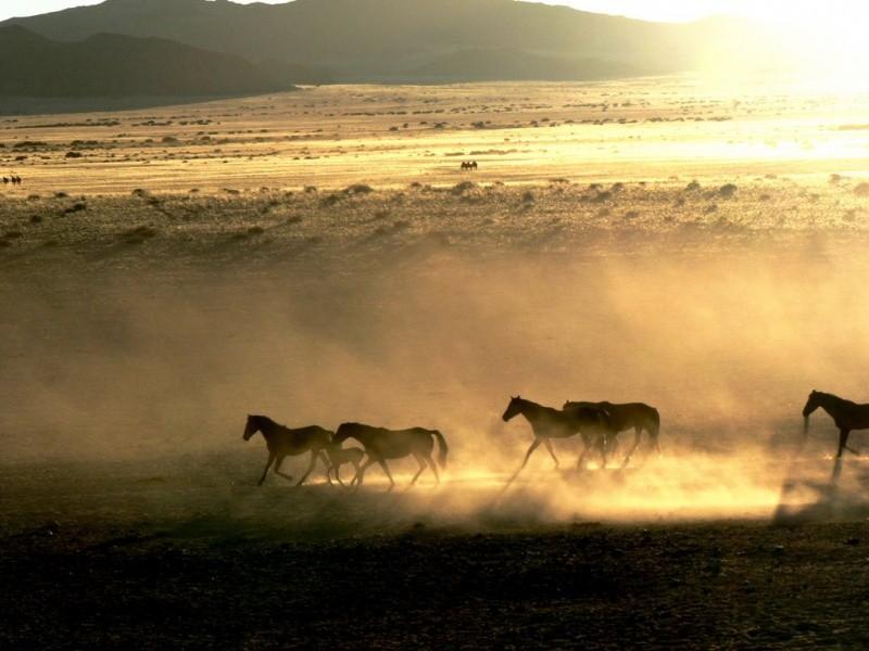5-namib-aus-horses-at-sunset-1459424876