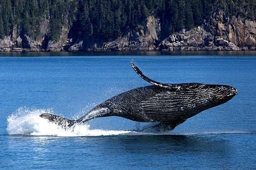 whale-3694489-340