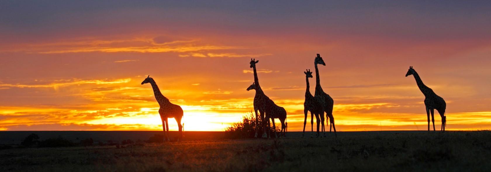 Tour Sudafrica Alla scoperta degli