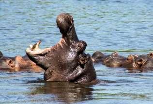 Cascate Vittoria e Botswana
