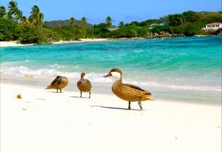 Giamaica EXPLORA RESORT RIU NEGRIL 5*