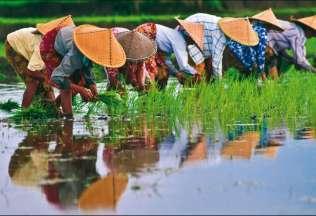 Tutto Vietnam