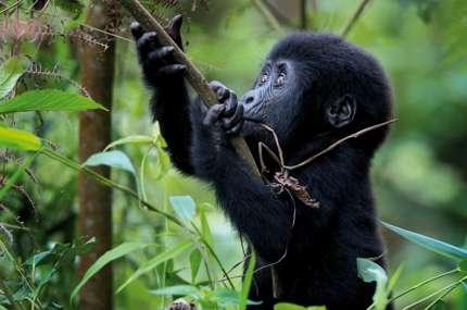 Uganda Active